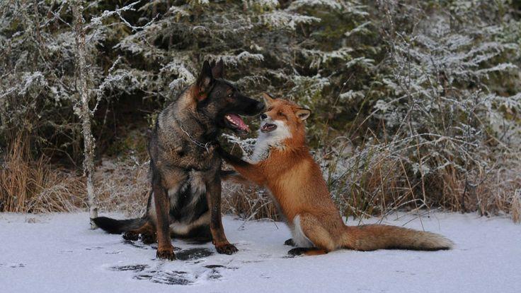 To gode venner - Foto: Torgeir Berge / Privat
