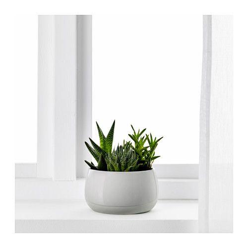 SUCCULENT Krukväxt med kruka - IKEA