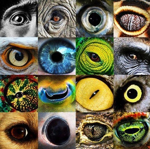themagicfarawayttree:    Eyes of Nature - Incredibly Close-up Animal Cornea.