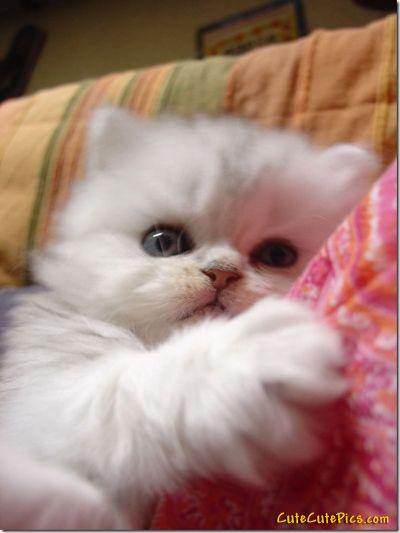 Fur baby <3