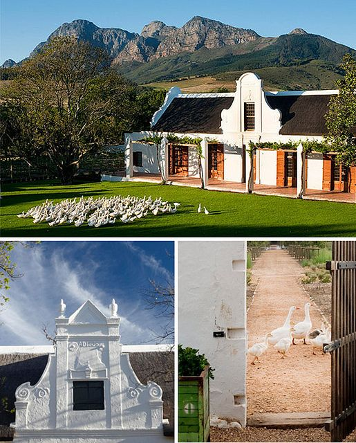 Babylonstoren is a Cape Dutch farm (one of the oldest!) in the Cape Winelands, South Africa, with vineyards and orchards surrounded by the dramatic mountains of the Drakenstein Valley. It has an exceptionally well–preserved werf dating from 1690. A fruit and vegetable garden of botanical diversity supplies a remarkable restaurant.