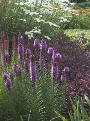 90 best ideas for a native northeastern garden images on for Cool low maintenance plants