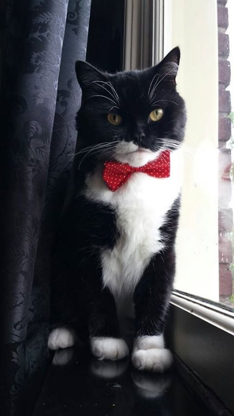 Handsome Tuxedo with a red bow tie
