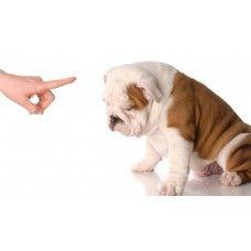 http://home4pet.com/Pet-Services/Pet-Trainers-Handlers/basic-training-module-3-months-