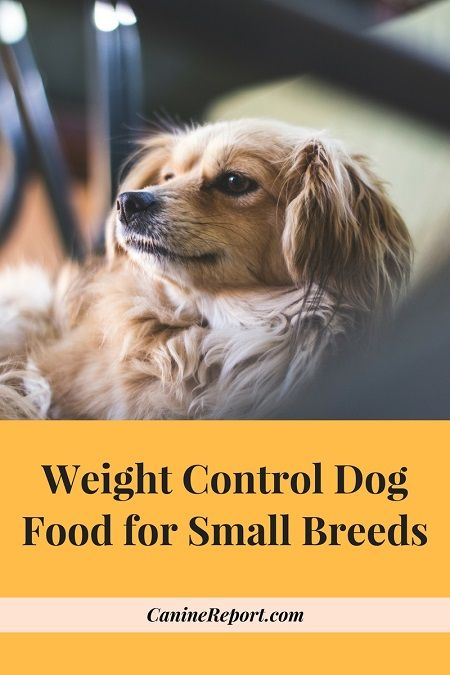 Weight Control Dog Food for Small Breeds