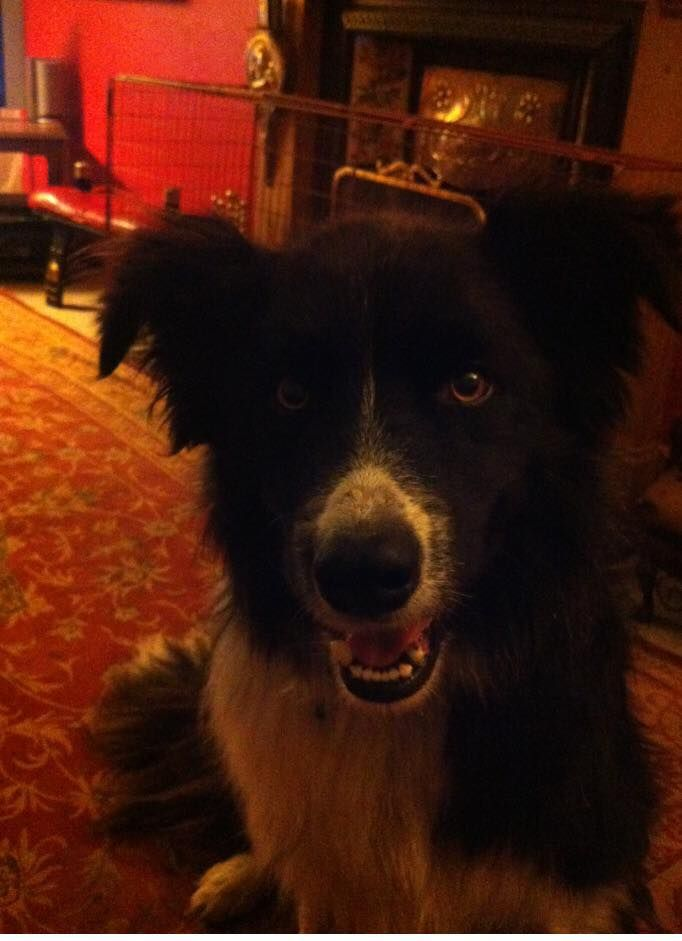 'Fly', our lovely Collie Dog has been missing since 16/01/17 after a walk on Newtonhill/ Lentran, close to our house. He disappeared off and has not come home yet. He is chipped and police are aware but no luck so far. Please keep an eye out for him wherever you are. He is very muchRead More