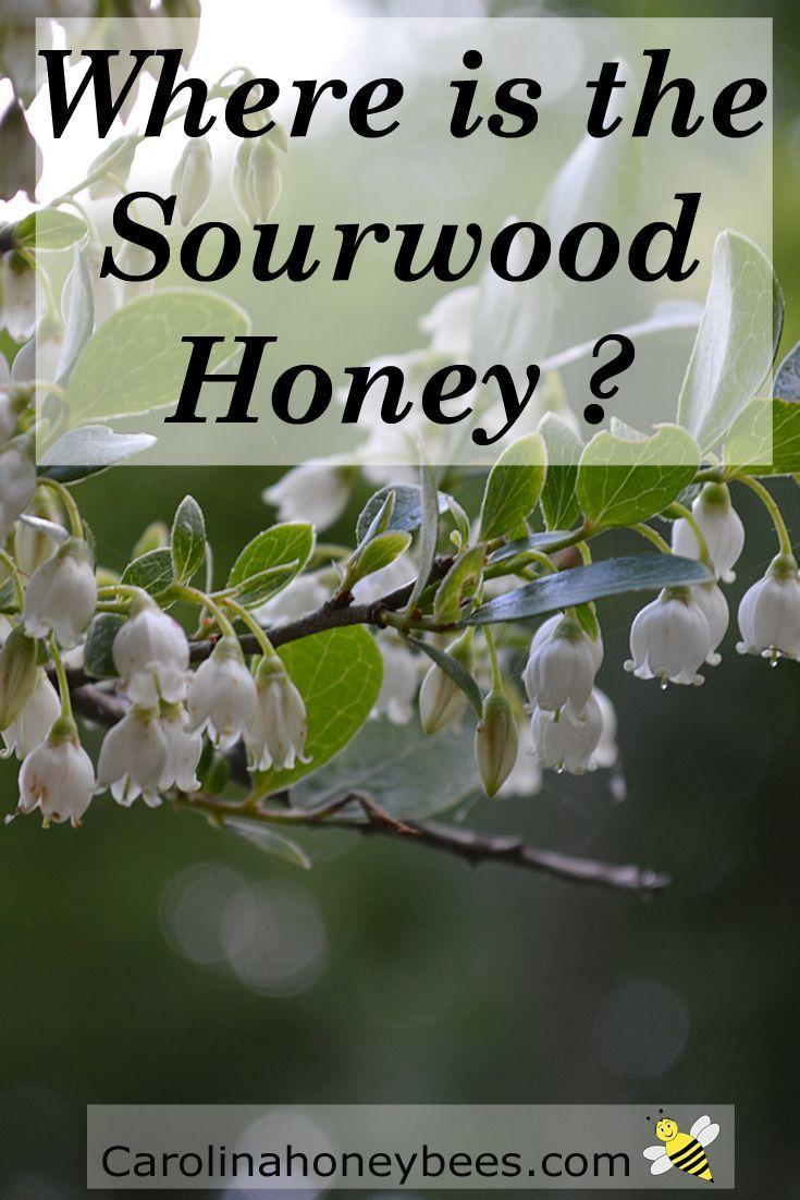 south carolina sourwood honey from Carolina Honeybees Farm
