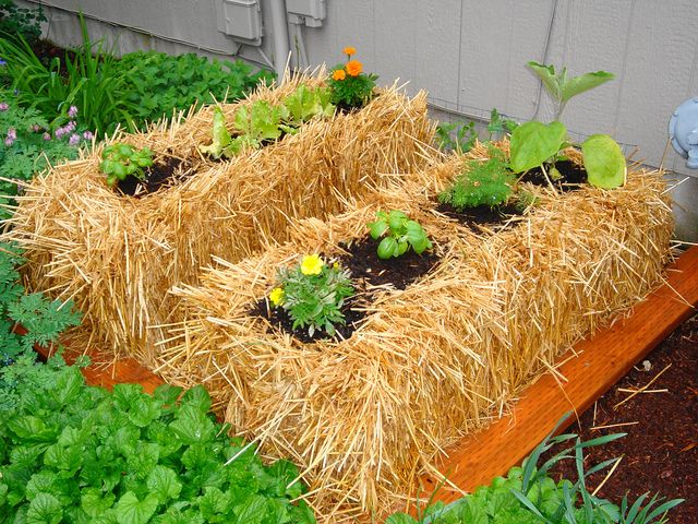 What a great idea. Hay bales as garden planters or use them to form a raised planter bed!