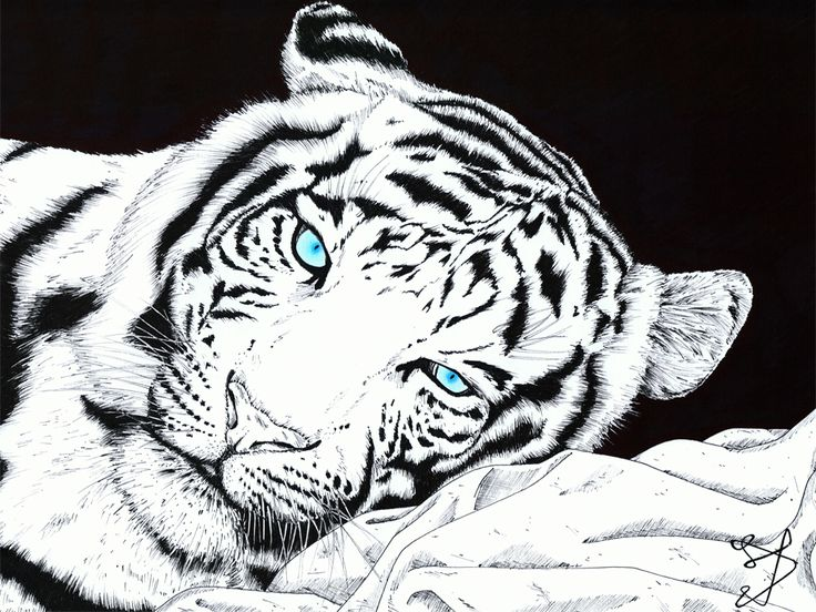White Tiger by Phyreon7