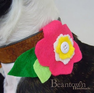 dress up a dog collar