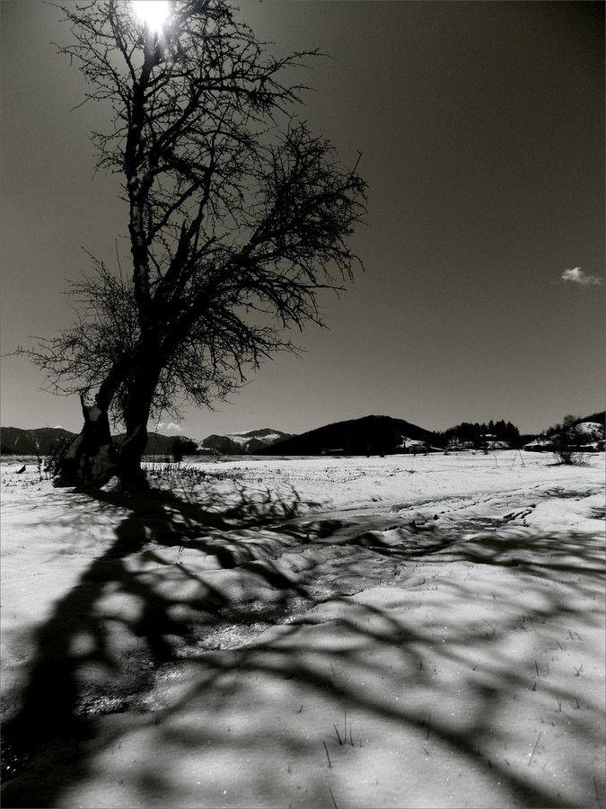 dark tree by George Kotanitsis on 500px