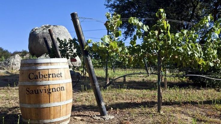 11 San Diego Wineries to Visit Right Now - Eater San Diego