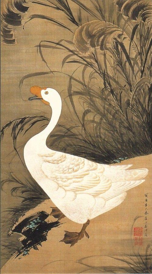 動植綵絵-13-芦鵞図(ろがず)