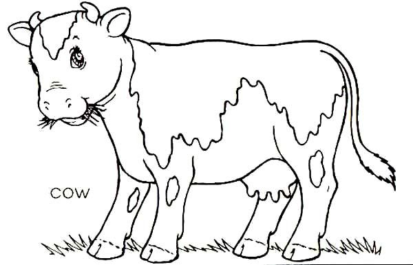 Cow Cow Eat A Lot Of Grass Coloring Page