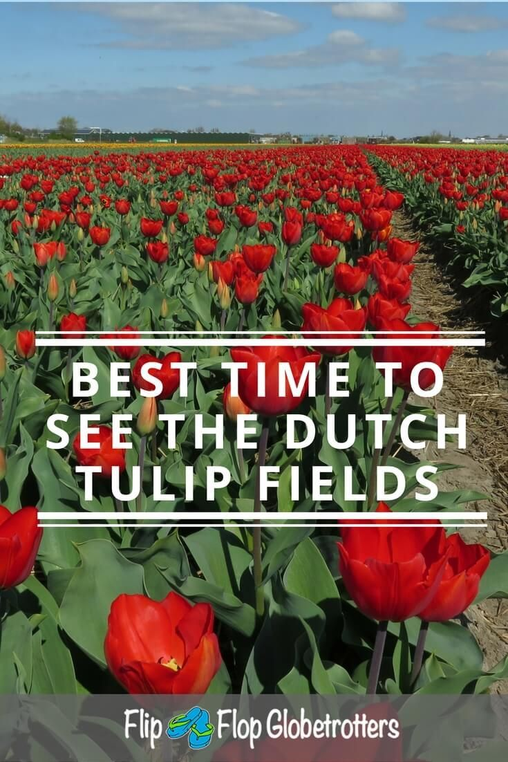 Visiting the Dutch tulip fields - The Dutch tulip fields are world famous. And rightly so. It's amazing to find yourself in the middle of a colourful, fragrant sea of tulips. You don't have to go to the Keukenhof to see the famous Dutch tulips! Find out all there is to know about tulip related events in The Netherlands and where to go for the ultimate tulip experience. ***************************************** Netherlands | tulips | flower bulbs | Dutch | flowers | tulip events Netherlands…