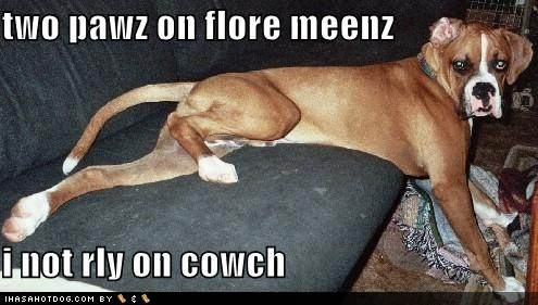 : Boxers Best Dogs, Things Funny, Really Funny, Funny Dogs, Funny Pictures, Fur Babies, Funny Dog Pictures, Boxers Animals, Funny Doggies