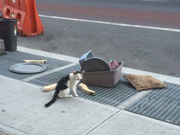 Cat Abandoned On Street Corner With His Litter Box RESCUED. ARE YOU KIDDING ME?!  What ANIMAL did this?