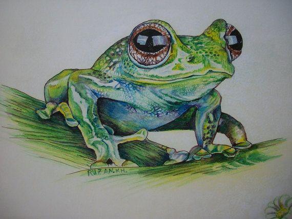 Rana  disegno rana  rana  matite acquerellabili su di Stellangelo