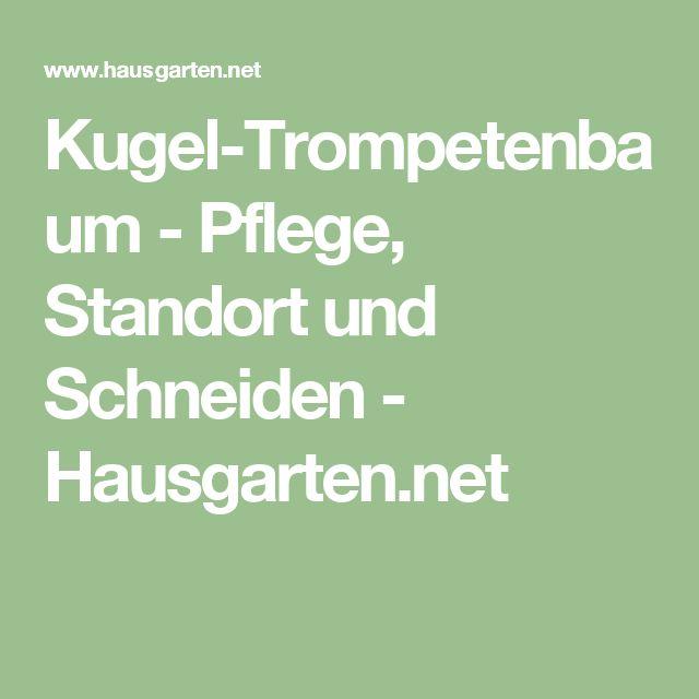 Kugel-Trompetenbaum - Pflege, Standort und Schneiden - Hausgarten.net