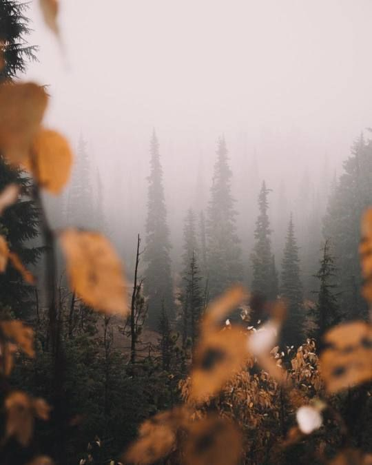 I Went Out Into The Wilds On My Own Today And Cried For Everything And Everyone To Have P Nature Photography Trees Nature Photography Fall Photography Nature