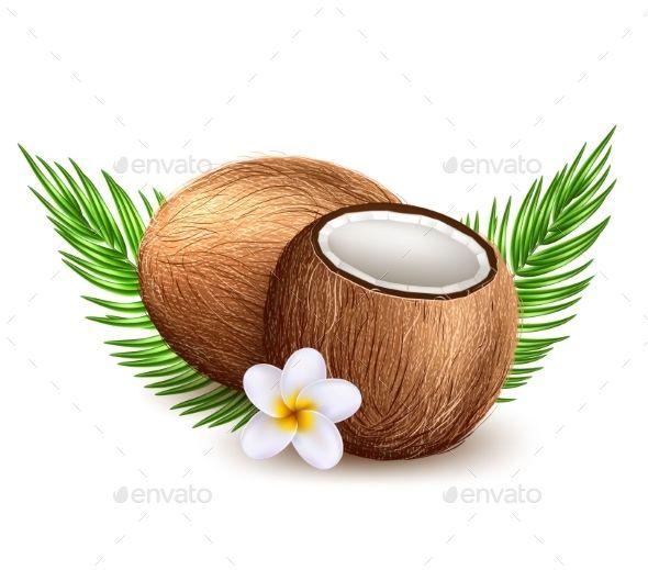 Image Result For Coconut Watercolor Coconut Watercolor Graphic