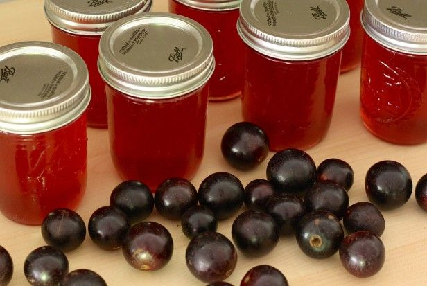 Homemade Gift-Giving: Made Your Own Muscadine Grape Jelly --> http://www.hgtvgardens.com/canning/muscadine-jelly?soc=pinterest