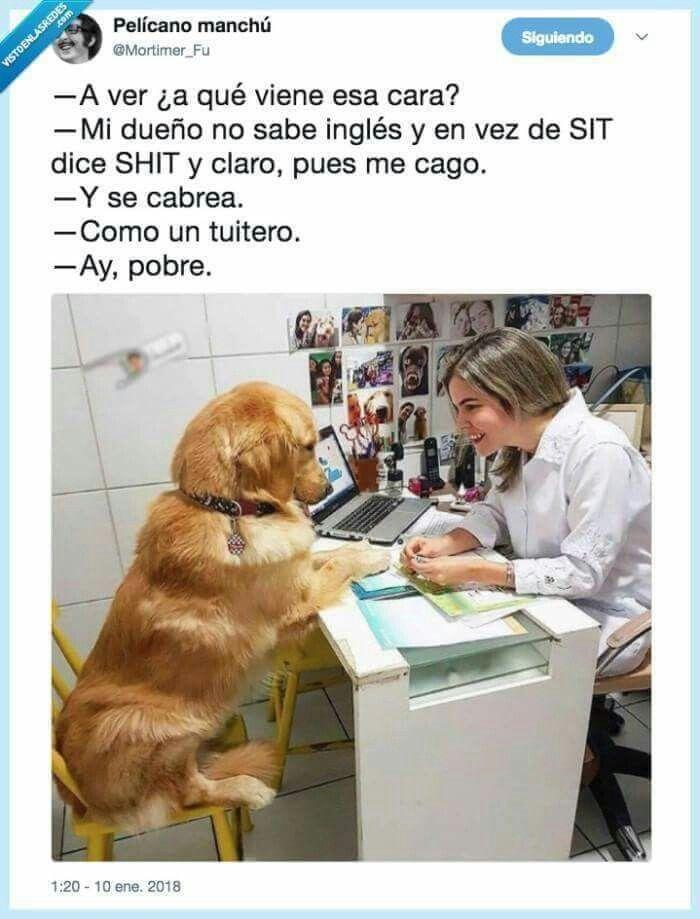 Saber Ingles Chistes De Perros Memes Perros Perros Frases