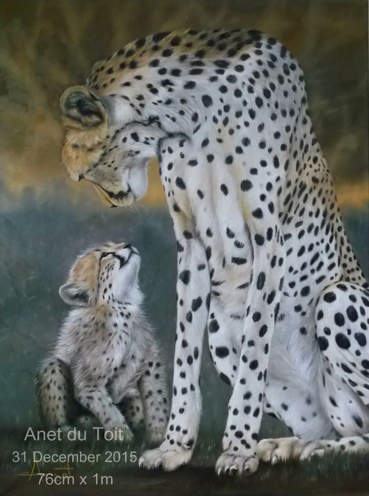 'I love YOU more!' Oil on stretched canvas 76cm x 1m Reference photo by Todd Gustafson. Commissioned / SOLD #wildlife #cheetahs #art #africa