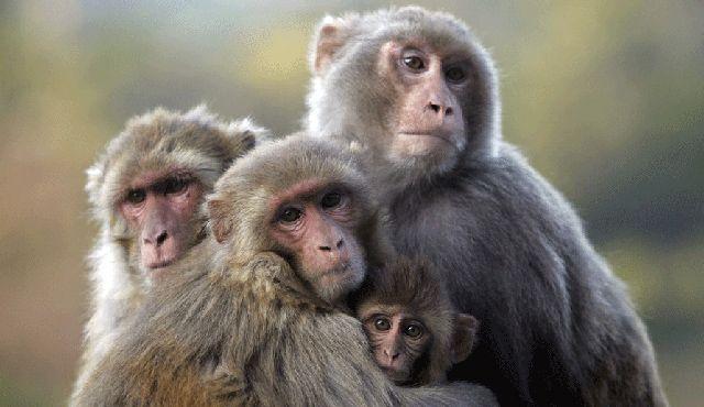 Ημέρα της Μαϊμούς 14 Δεκεμβρίου