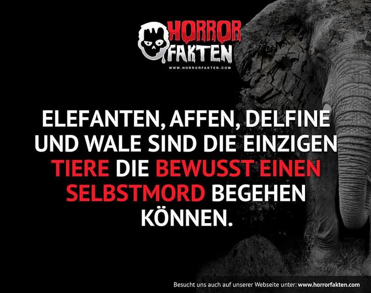 Sind ja auch Intelligente Tiere #horrorfakten
