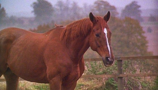 Ginger the chestnut mare. As played by Hightower, the ...