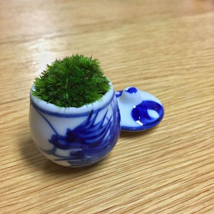 苔ミニ盆栽