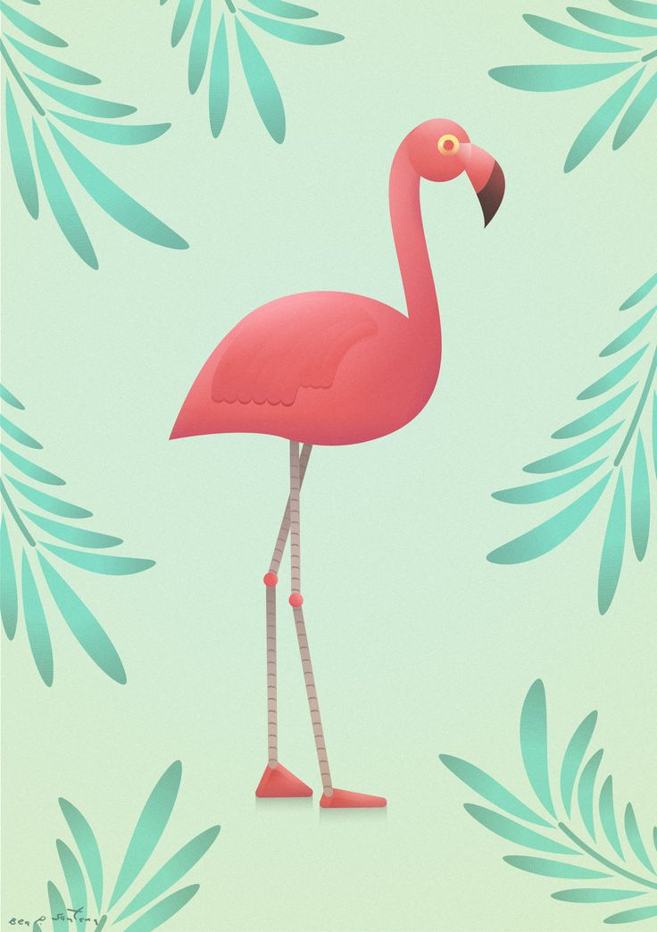 Flamenco/Flamingo  Ilustración realizada por Bea P. Santana / Illustration by Bea P. Santana || Vector art