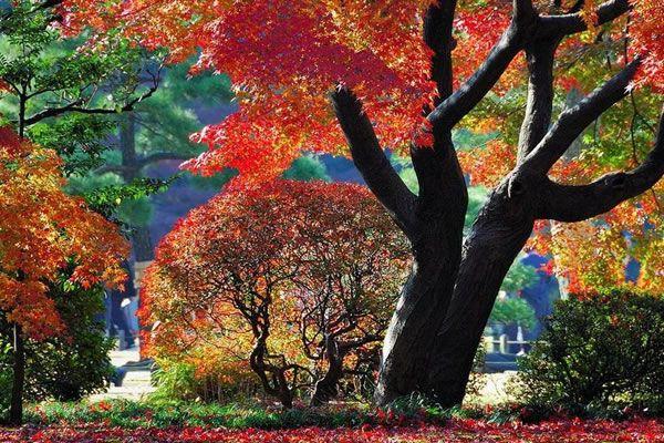 Khu vườn Rikugien – Tokyo - Nhật Bản vào mua thu thật lộng lẫy.
