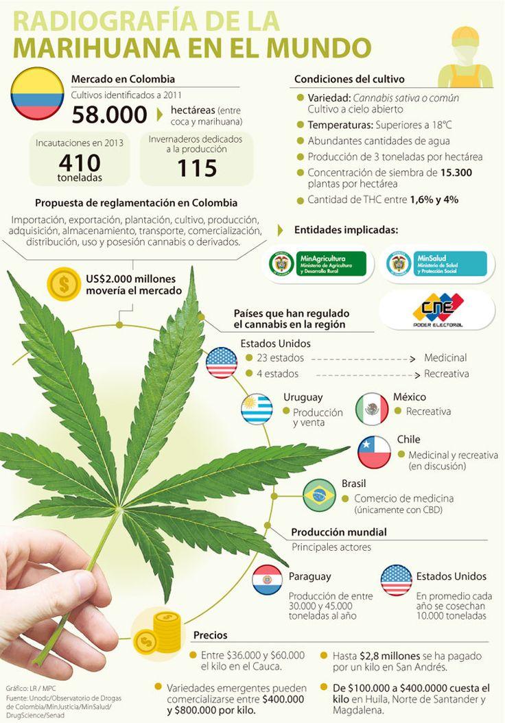 El negocio de la marihuana medicinal equivaldría al del banano y las flores