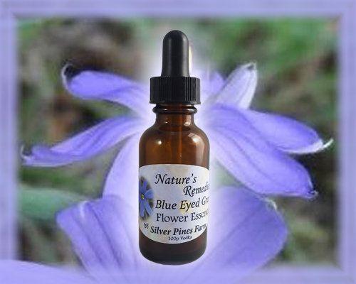 Blue Eyed Grass Flower Essence Essential Oils Grass Flower