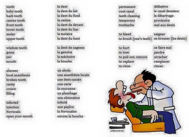 vocabulaire  chez le dentiste