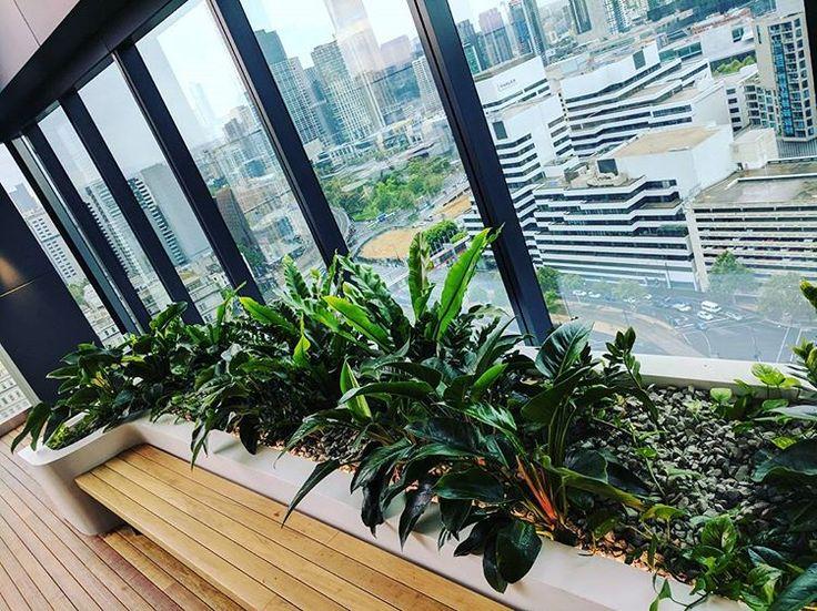 #fytogreenaustralia #fytogreen #roofgarden #rooftop #melbourne #docklandsmelb #hydroponics #plantsofinstagram #planteddesign