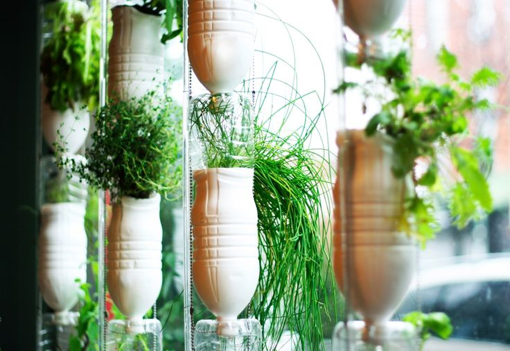 Vous entendez de plus en plus parler d'autonomie alimentaire, et vous rêvez de cultiver vous-même vos légumes biologiques. Voici mon jardin d'appartement !