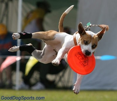 b1e5fe7ee5337e6d17d57e551c41ac7a dog agility training training dogs 64 best happy adventure dogs images on pinterest animal pictures