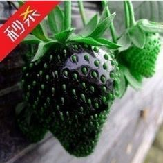100pcs/lot hot selling black strawberry seeds for DIY home garden US $2.99