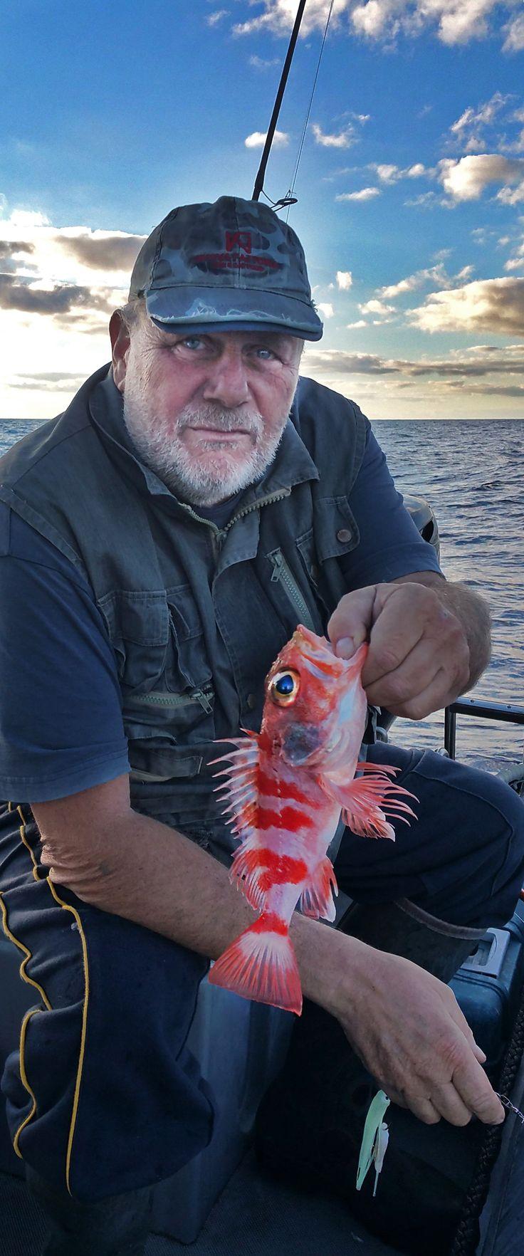 Helicolenus dactylopterus, noto in italiano come scorfano di fondale, è un pesce osseo marino della famiglia Sebastidae.  Ettore e gli scorfani di fondale... #guidofrilli