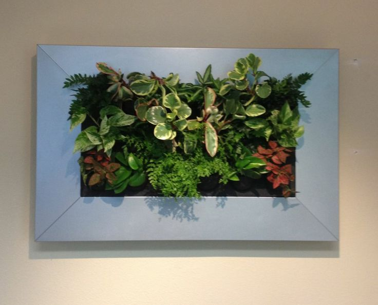 """Live Picture"" from Suite Plants. 28"" by 46"""