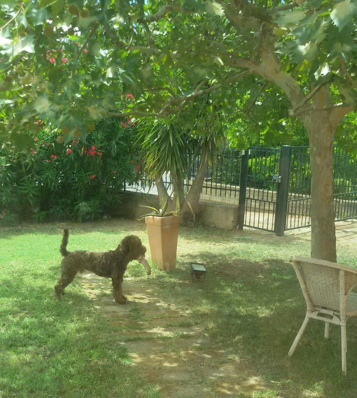 Un cane non se ne fa niente di macchine costose, case grandi o vestiti firmati; un bastone marcio per lui è sufficiente. J.Groan -Io e Marley