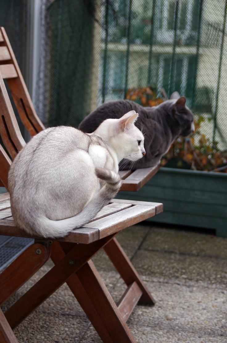 Loki et Poupie regardant dans la même direction :) #chat