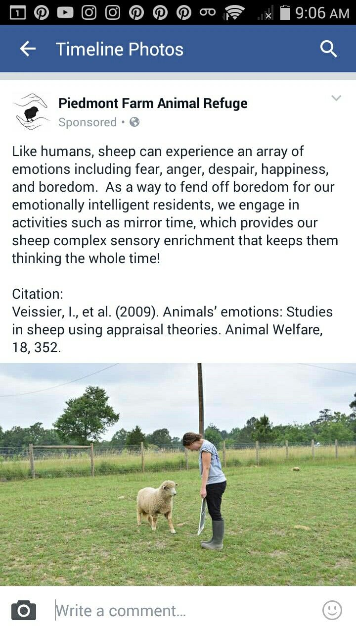 Uncategorized small business ideas small businesses ehow home business ideas to startsmall business ideas bad good ugly ideas - One Of My Favorite Rescues Uses A Mirror For Enrichment With A Sheep Way To