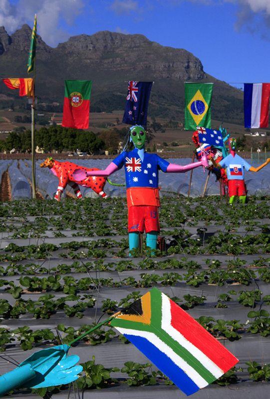Strawberry fields in Stellenbosch
