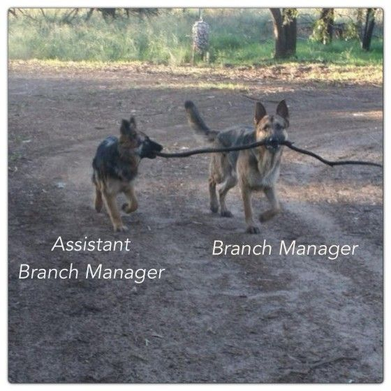 Branch manager and assistant.....cute