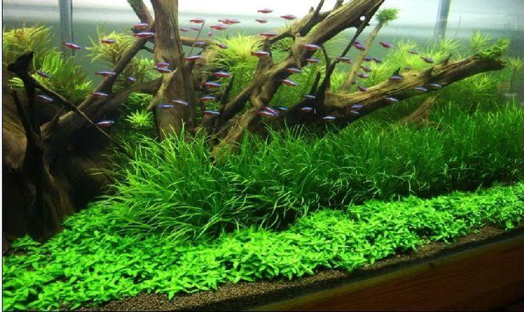 Como montar um aquário plantado