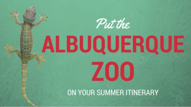Visit the exhibits of the Albuquerque Zoo this Summer.